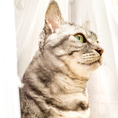 モデル猫のめいお嬢様