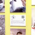 可愛い写真やグッズがいっぱい!ねこ休み展 in 横浜みなとみらいに行ってきました